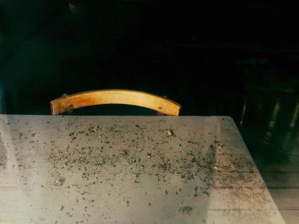 აკაკი შანიძის მუზეუმი განადგურებულია