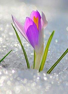ლექსები გაზაფხულზე