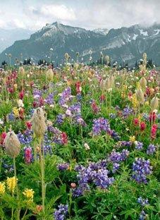 """""""ყვავილების ქვეყანა"""" სომხურად"""