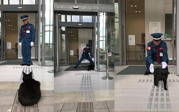 ფისოები, რომლებმაც იაპონიის მუზეუმი მსოფლიოს გააცნეს