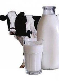 ეროვნულ გალერეაში რძის რეკლამას იღებენ